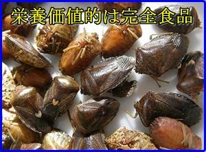 昆虫自販機が熊本に!昆虫食のカロリーと味は?サンプルの話題も!3