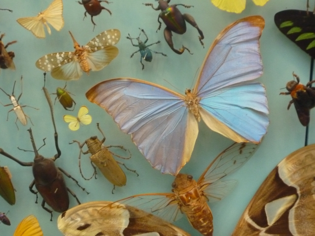 昆虫食はビジネスチャンス?寄生虫などの危険性と健康面の安全性は?
