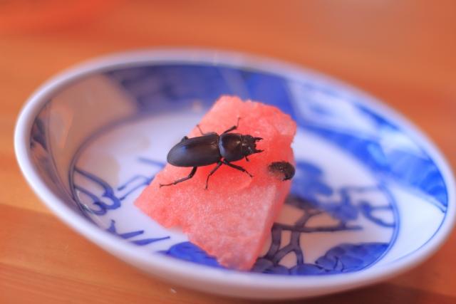 昆虫食の可能性って?みんなの意見が知りたい!将来の食糧問題は?3