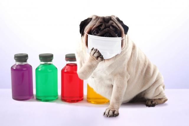インフルエンザで仕事休みたい!同僚に迷惑か感染のリスクどうする?