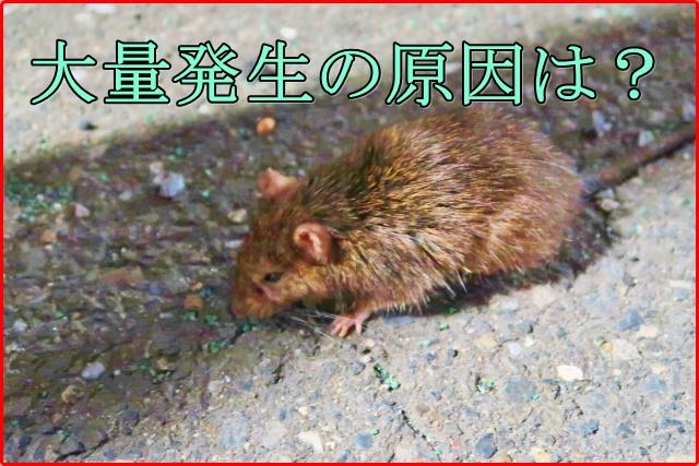 渋谷のねずみの種類や大量発生した原因は?コンビニは対策をしてた?1