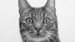 佐々木希ファンが心配する渡部建の全面自粛の理由とTwitter全削除の理由!